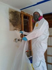 Mold Removal Technician in Memphis